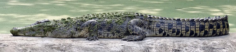 SW Croc